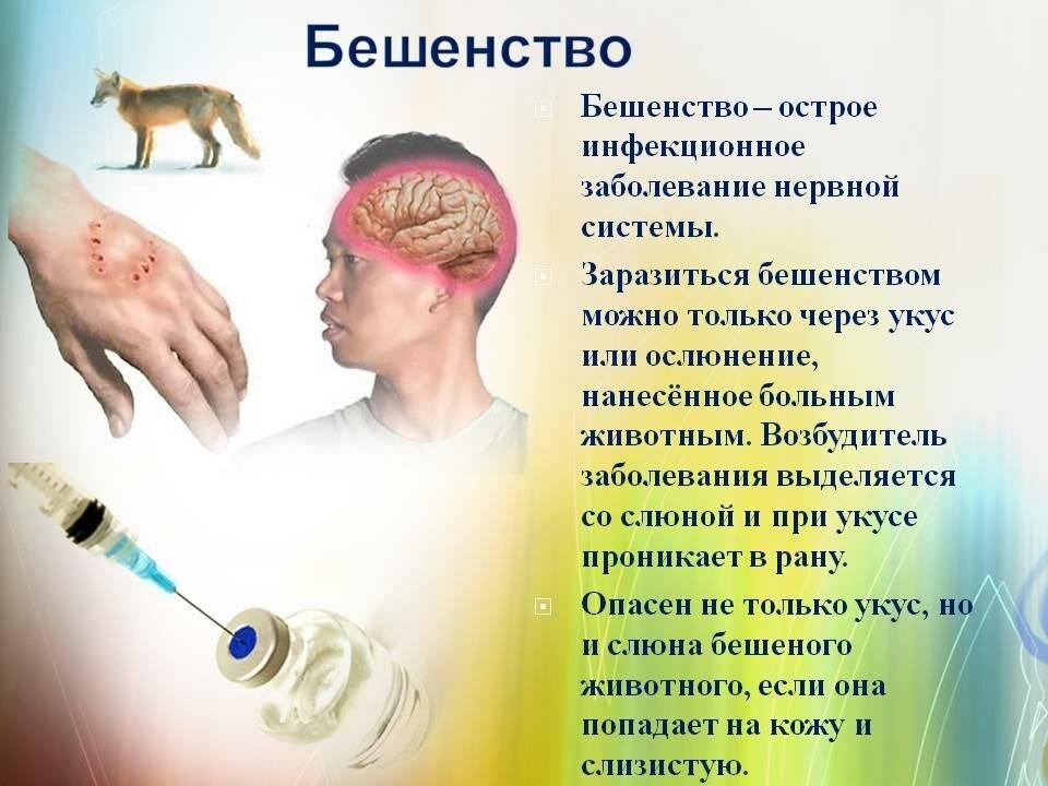 Паразиты, передающиеся от кошки к человеку