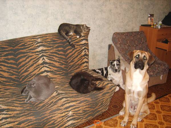 Тест: кто вы — кот или собака?. ридус