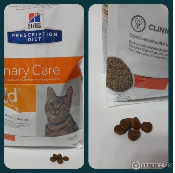 Чем нужно кормить кота при мочекаменной болезни