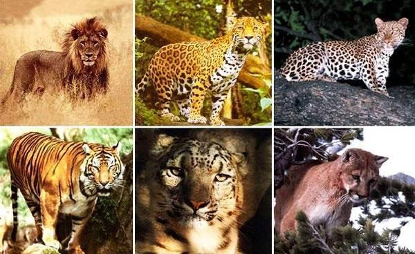 Кошачий гороскоп по дате рождения. гороскоп для кошек по знакам зодиака