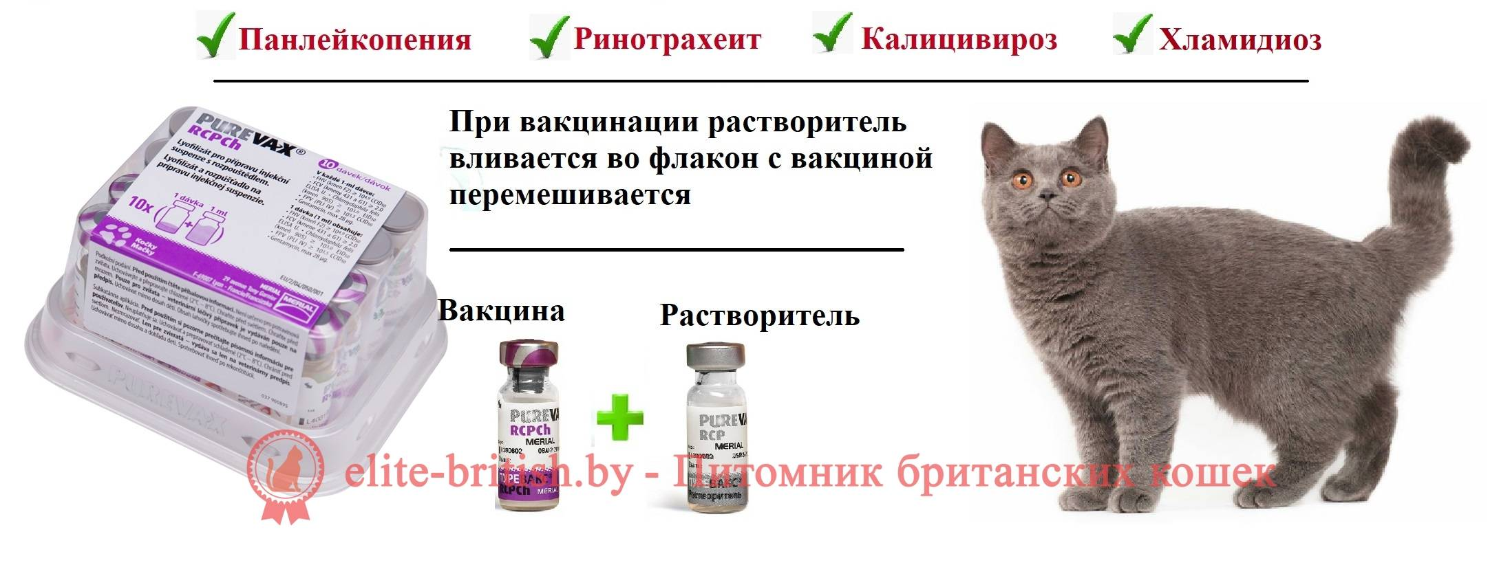 Всё о прививке кошке от бешенства