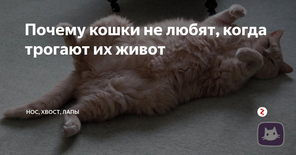 Как понять что кошка тебя любит?