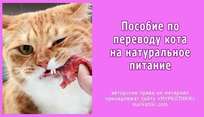 Можно ли купать кошек и как часто - как правильно купать кошку, если она боится воды, можно ли пользоваться обычным шампунем - лапы и хвост