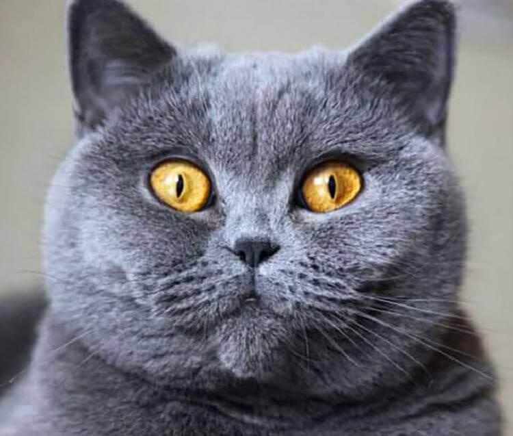 Какая вы кошка по знаку зодиака