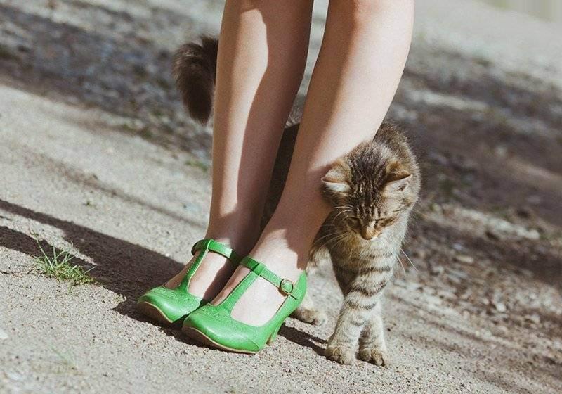 Почему кошка лезет в лицо мордой ⋆ онлайн-журнал для женщин