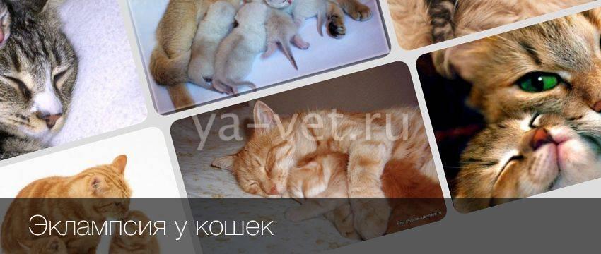 Эклампсия послеродовая у собак - кошки и собаки