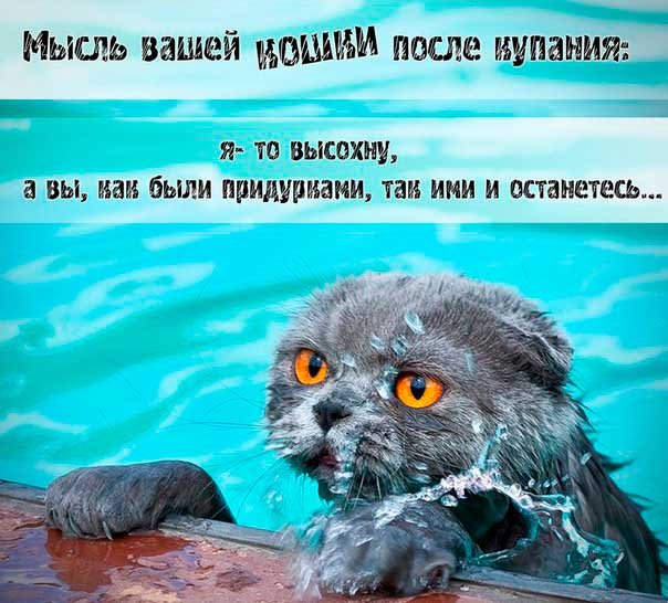 Как помыть кота, не вызывая стресс и страх