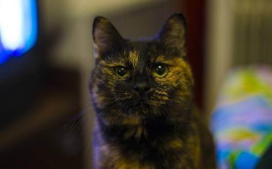 Причины возникновения и борьба с перхотью у кошек