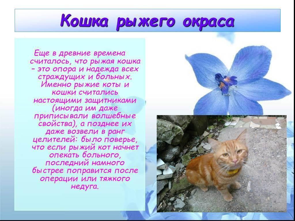 Черый, рыжий или белый кот: приметы и суеврия о домашних любимцах