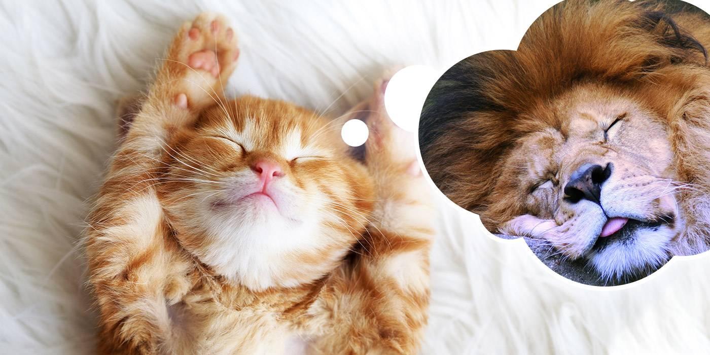 Собственный кот