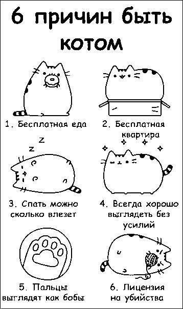 Что делать, если кот перестал есть?