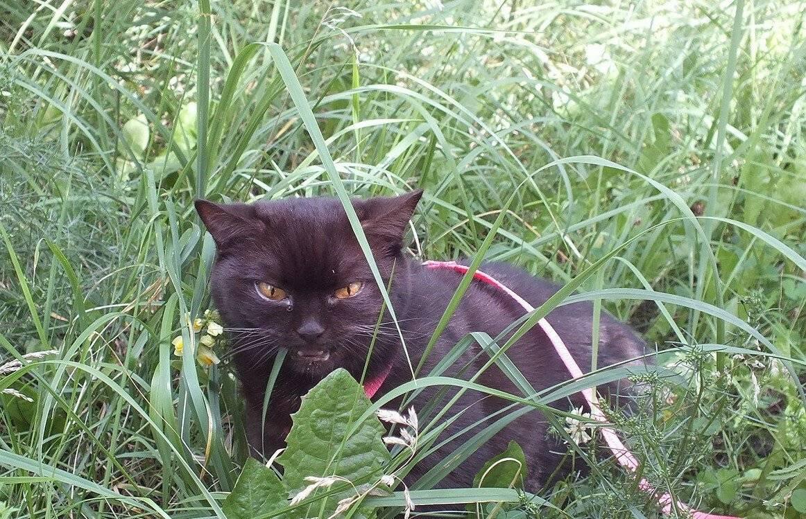 Сколько дней гуляет кошка | как долго, первый раз, при течке