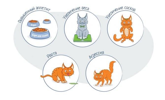 Как понять, что кошка родила всех котят   как узнать