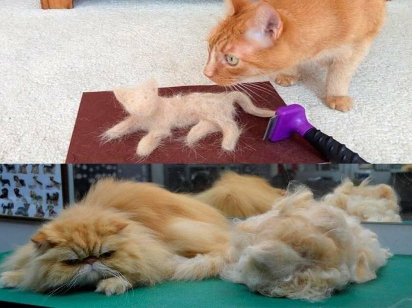 Спаривание кошек: как происходит, сколько длится половой акт, на какой день течки лучше вязать?