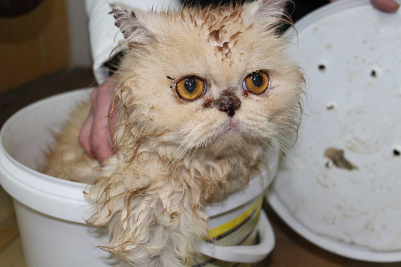 Рахит у котят и кошек: диагностика и лечение