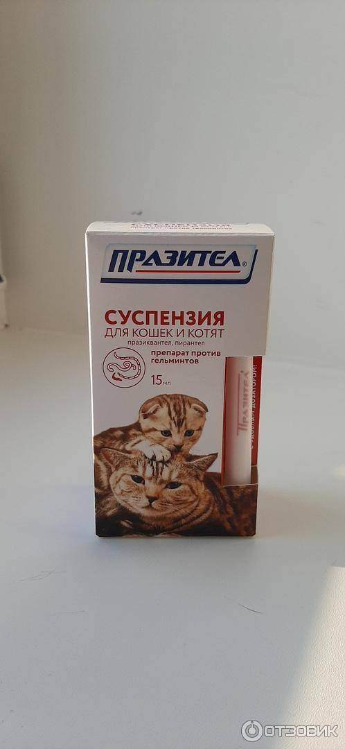Как глистогонить кошек (правильная дегельминтизация)