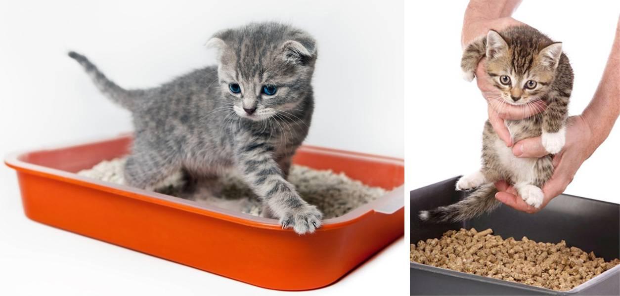 Как приучить котенка к лотку: 5 простых способов, советы и рекомендации