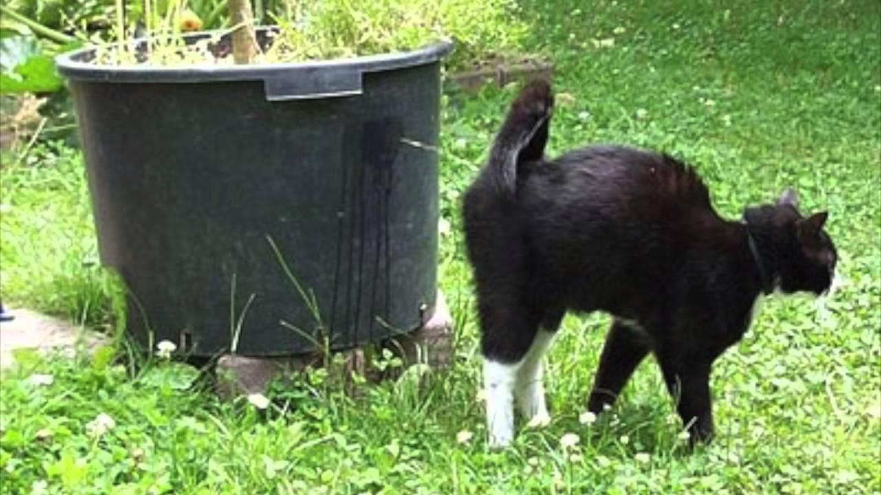 7 причин, почему кошка метит территорию - что делать - kotiko.ru
