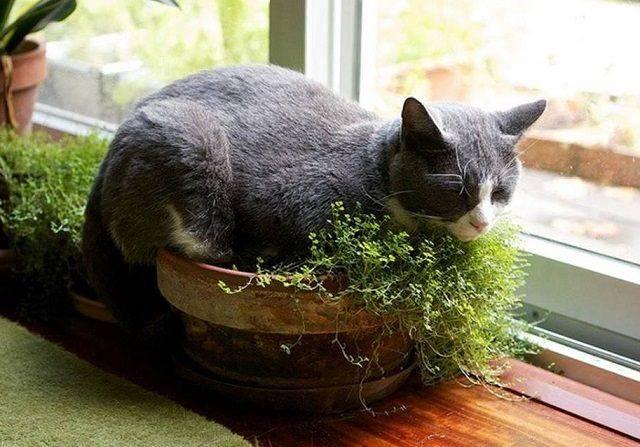 Как отучить кошку лазить в цветочные горшки и копать в них землю