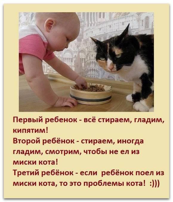 Когда котята начинают есть сами? узнаем!