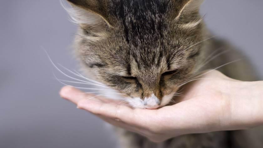 Питание для кастрированного кота