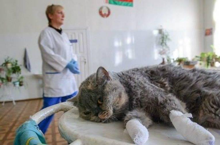 Операция мягкие лапки, отзывы хозяев об удалении когтей у кошек