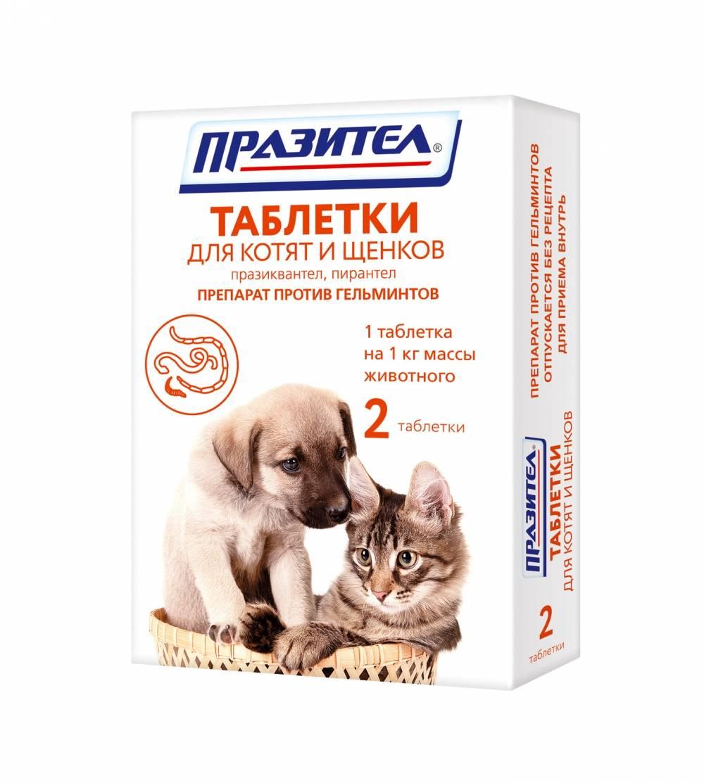 Антигельминтные препараты для кошек | широкого спектра, отзывы, лучшие средства
