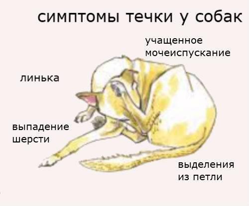 Сезон спаривания собак (видео)