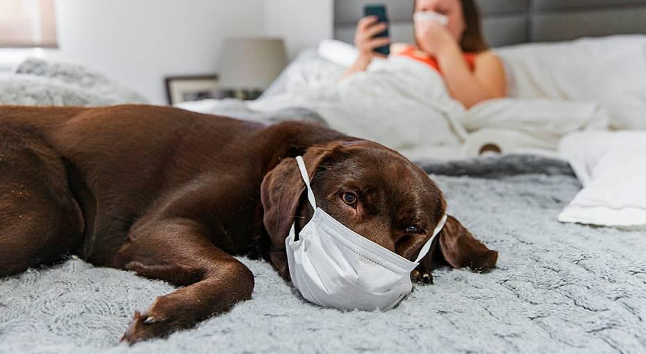 Может ли кошка заразиться коронавирусом от человека? коронавирус и кошки: можно ли заразить и заразиться, симптомы, лечение | здоровье человека