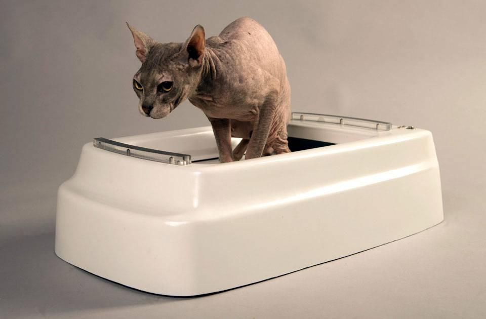 Какие бывают туалеты для кошек, какой лучше: лоток, домик, автоматический самоочищающийся и другие