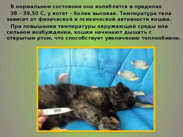 Температура тела у кошек и котят | нормы и как померить в домашних условиях