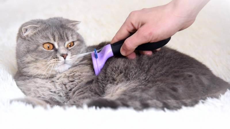 Фурминатор для кошек: отзывы ветеринаров и покупателей