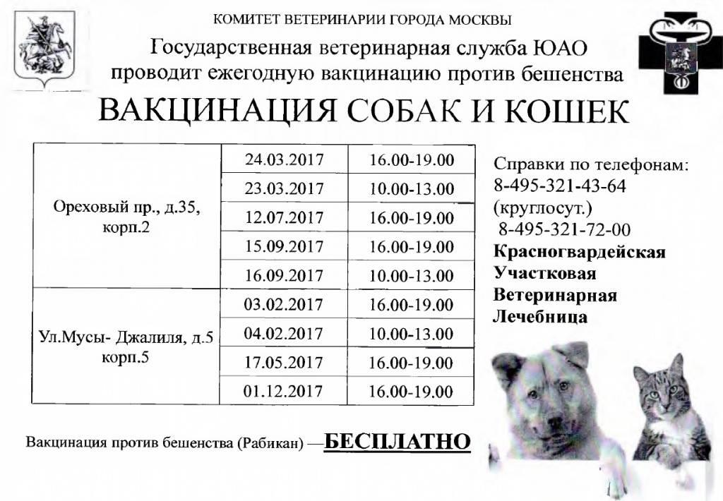 Вакцинация кошек: стоимость прививки для кошек в москве - правила и сроки необходимой вакцинации на дому