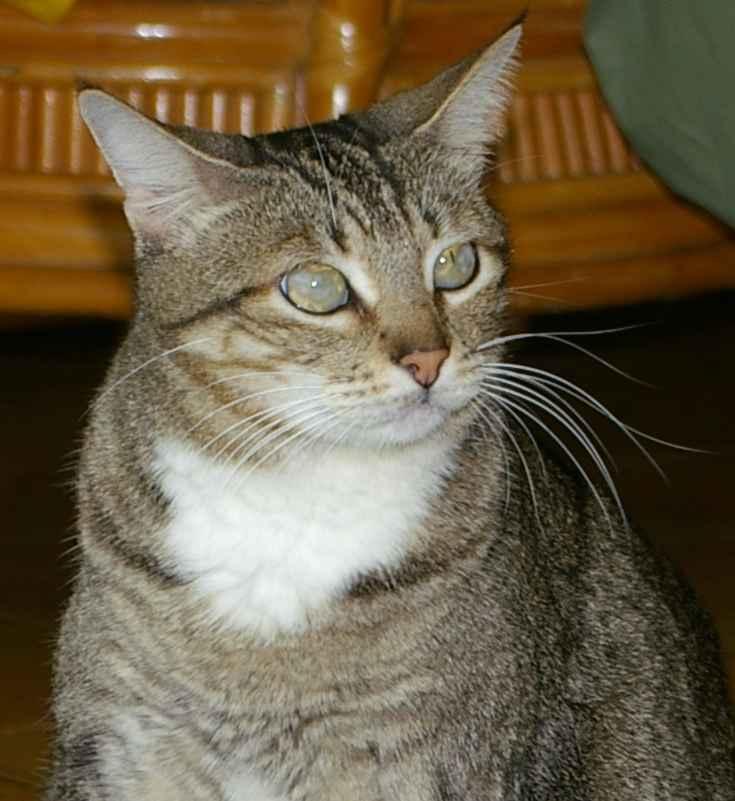 Почему у кошки глаза наполовину закрыты пленкой?