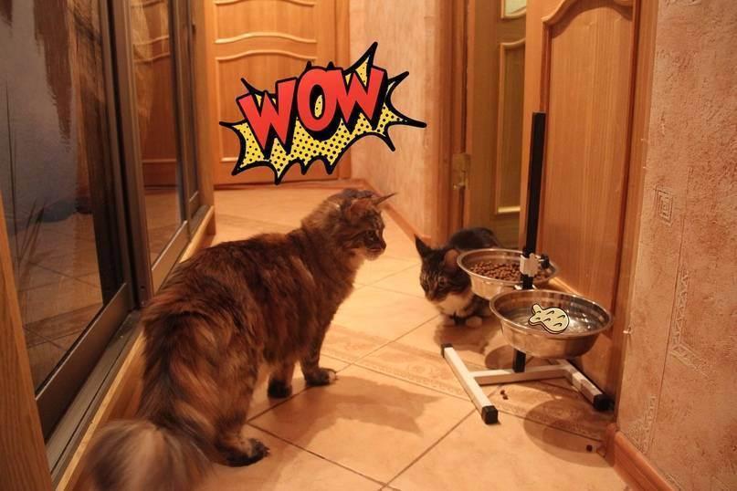 Как подготовиться к котенку?
