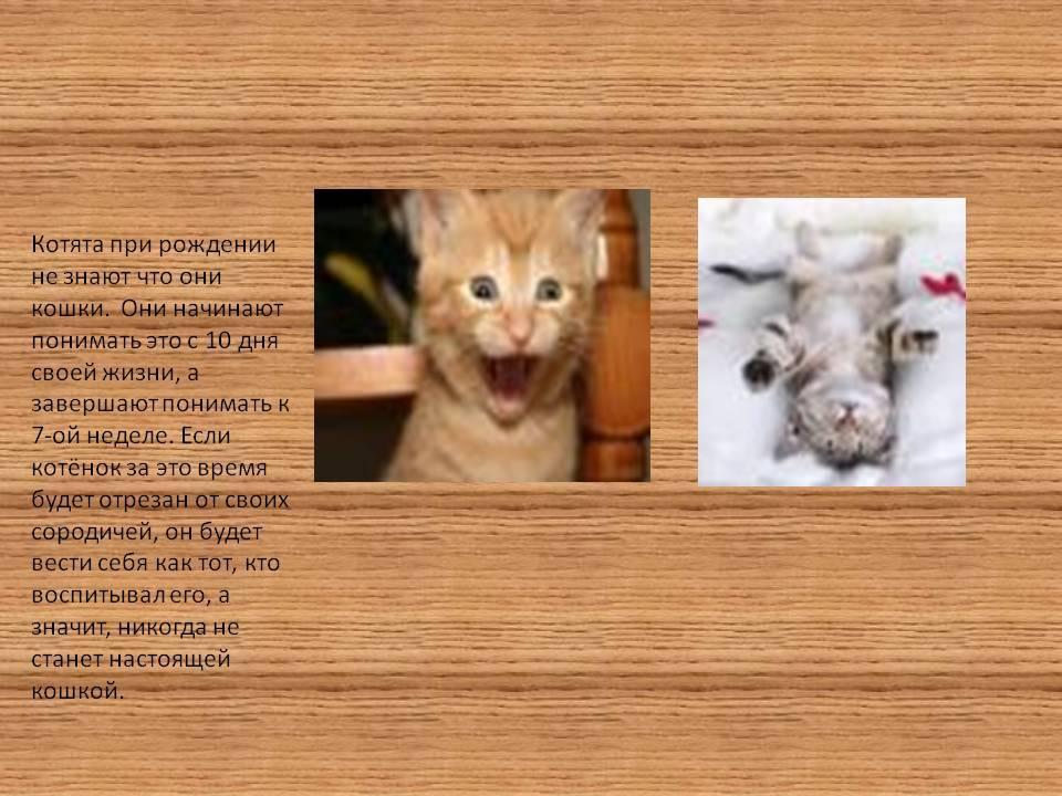 Развитие котят после рождения по дням: особенности, уход
