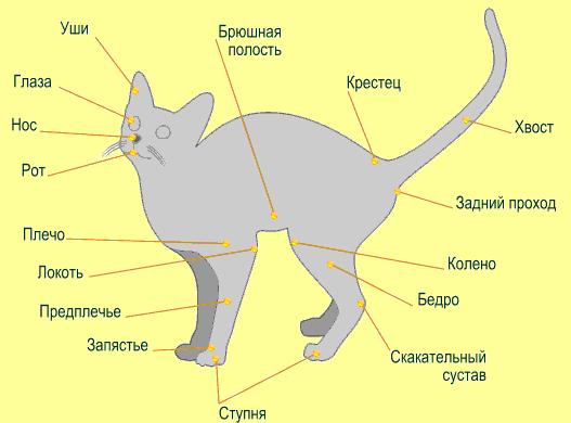 Читать книгу британские короткошерстные кошки олеси пуховой : онлайн чтение - страница 2