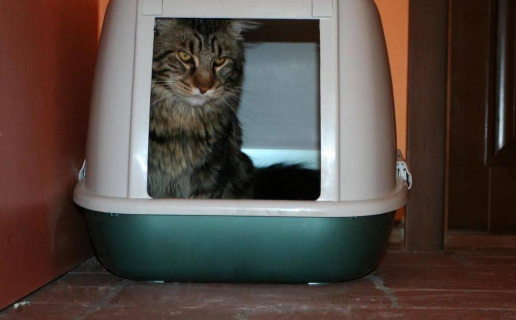 Топ-15 лучших био туалетов для кошек