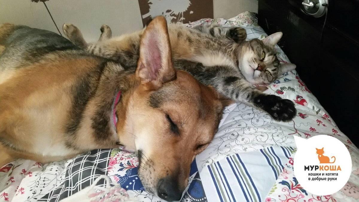 Как подружить двух кошек или кошку с собакой: советы владельцу
