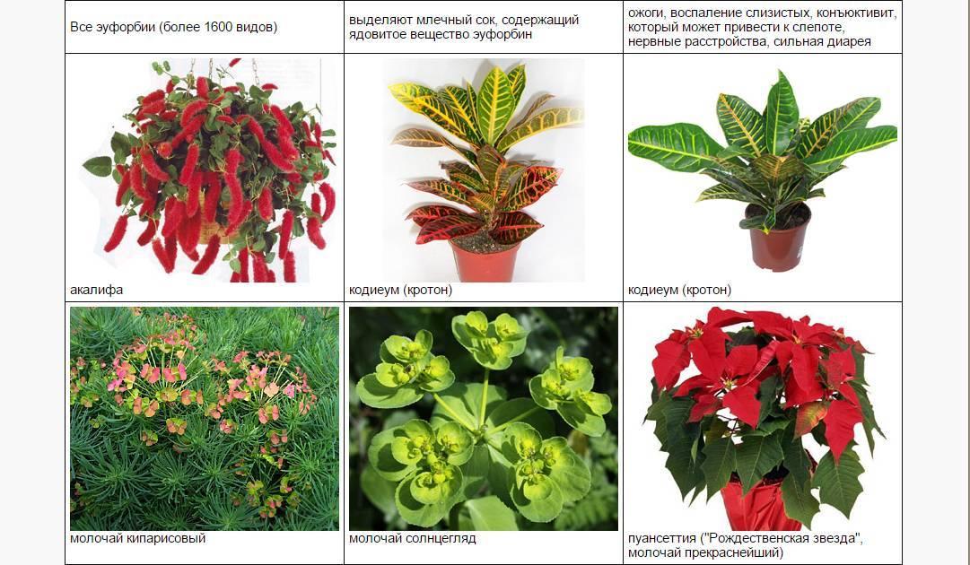 50+ ядовитых растений и цветов для кошек