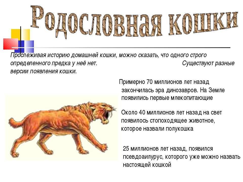 История происхождения кошек на земле: как появились домашние коты