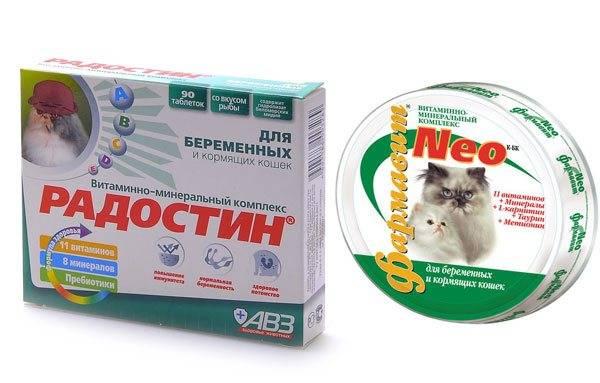 Рекомендации ветеринаров, чем кормить беременную и кормящую собаку