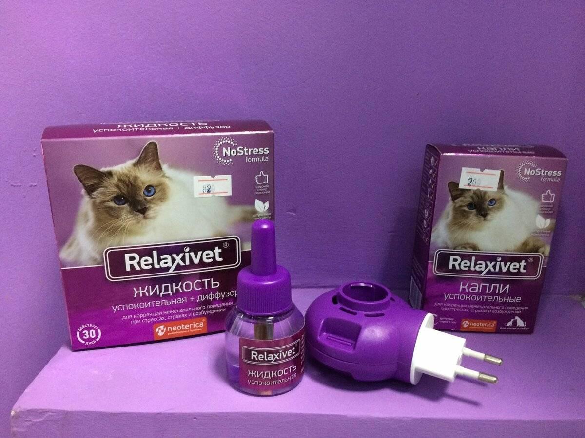 Снотворное для кошек при поездке и стрижке шерсти