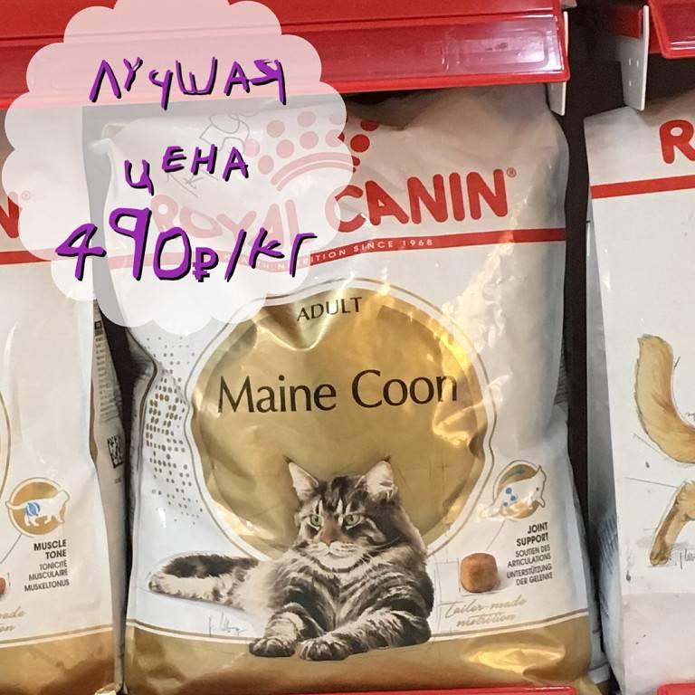 Чем кормить взрослого мейн-куна – правильный рацион, рекомендации