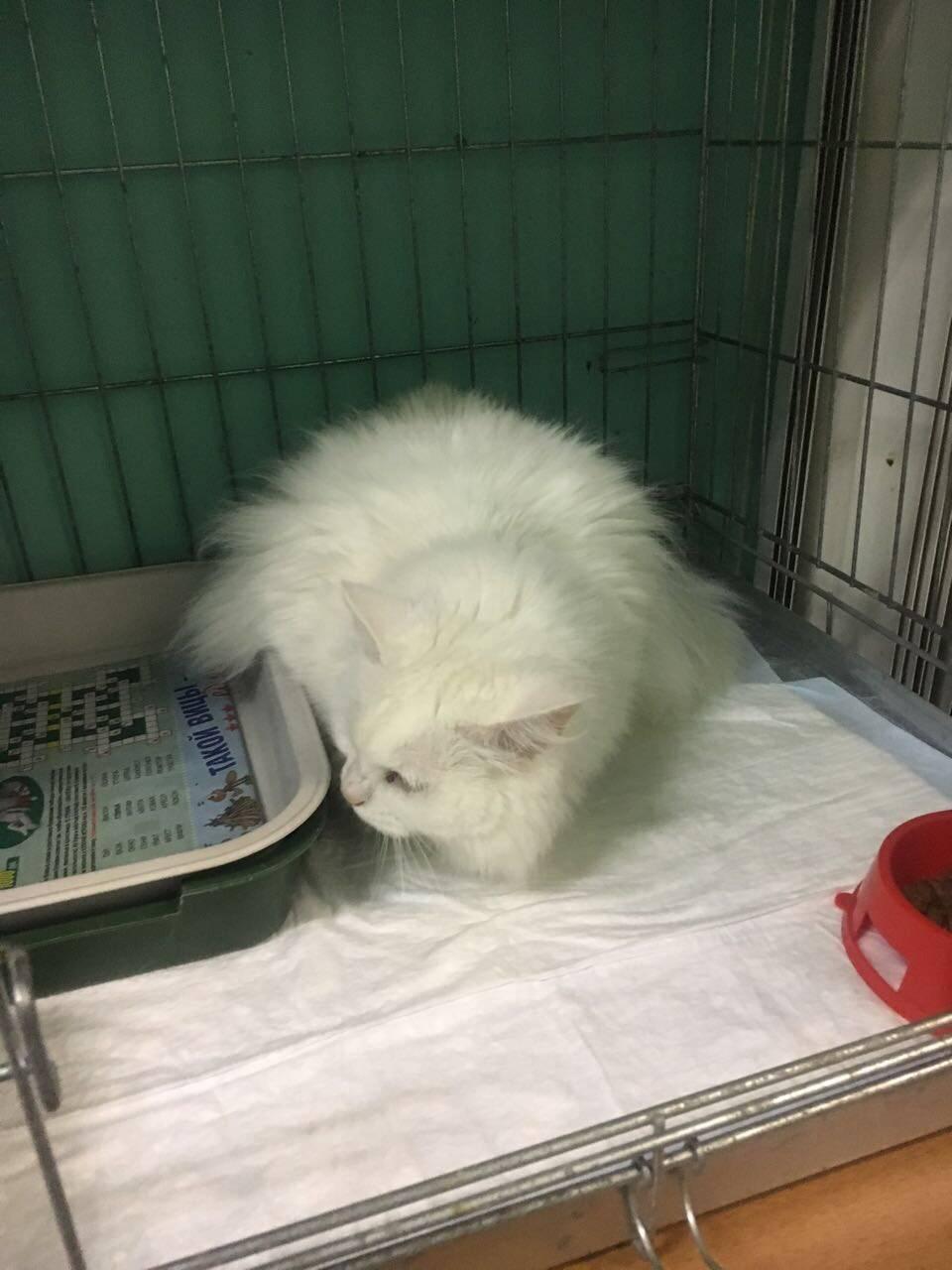 Сколько стоит усыпить кошку в ветклинике и как проходит данный процесс?