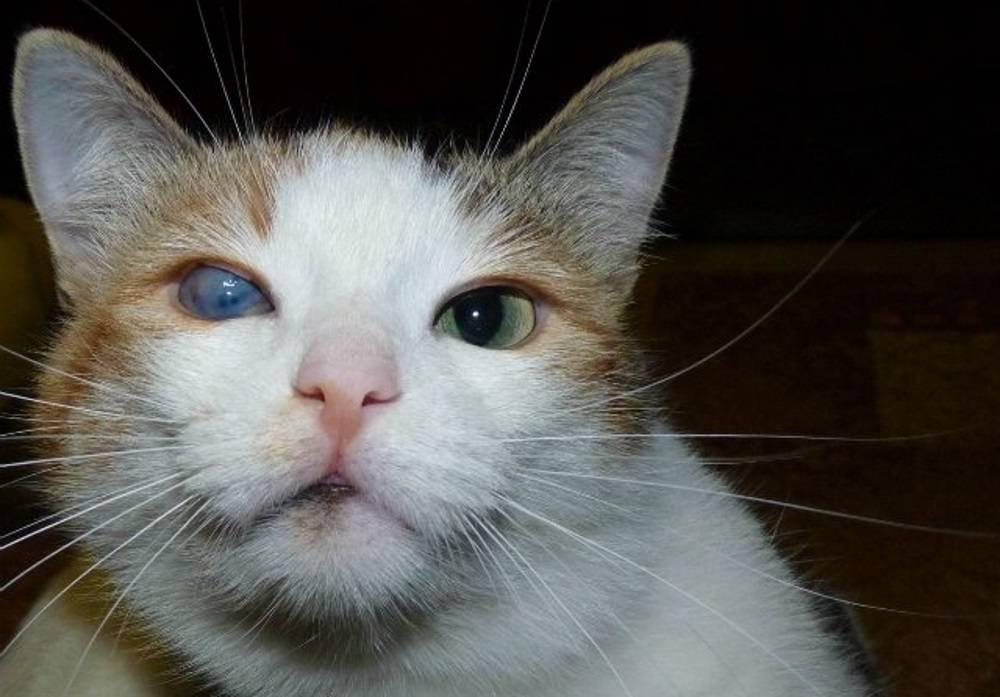 Может ли пленка на глазах быть опасной для кошки?