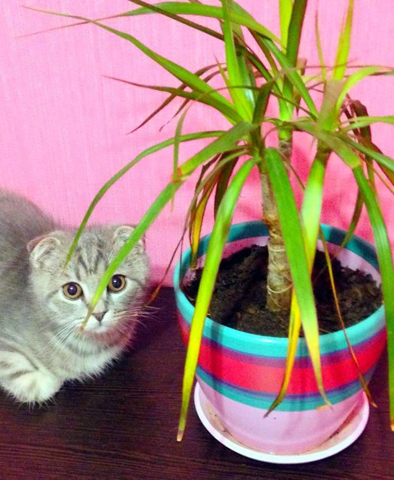 Кошка ест растения. как защитить растения от кошки?