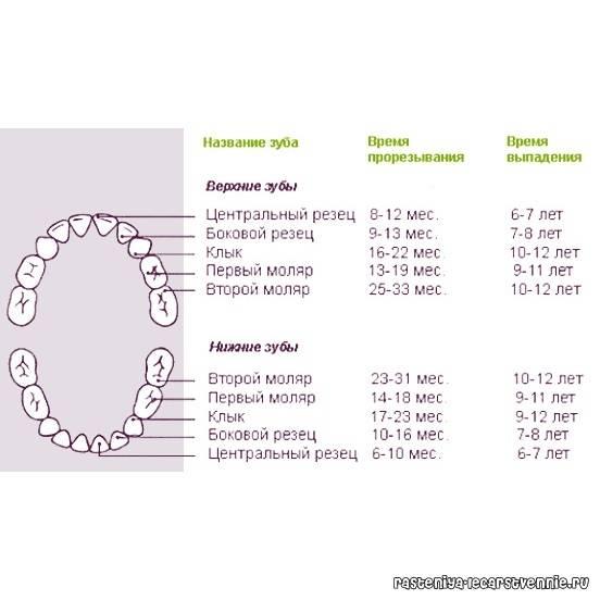 Когда меняются зубы у котят: особенности смены зубов у разных пород