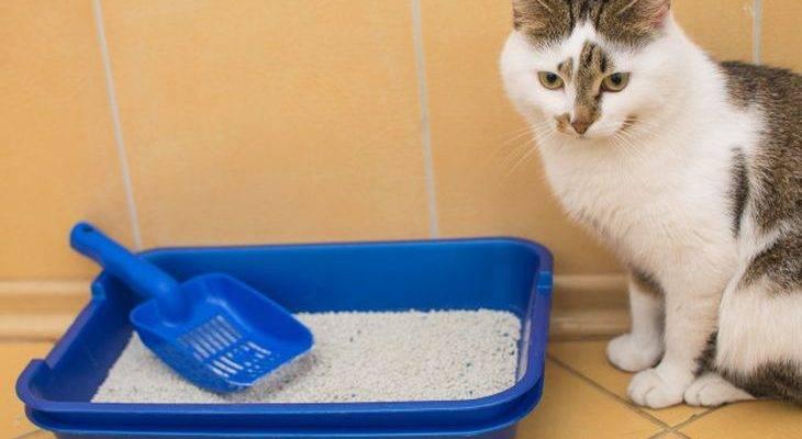 Как правильно насыпать наполнитель в кошачий лоток?