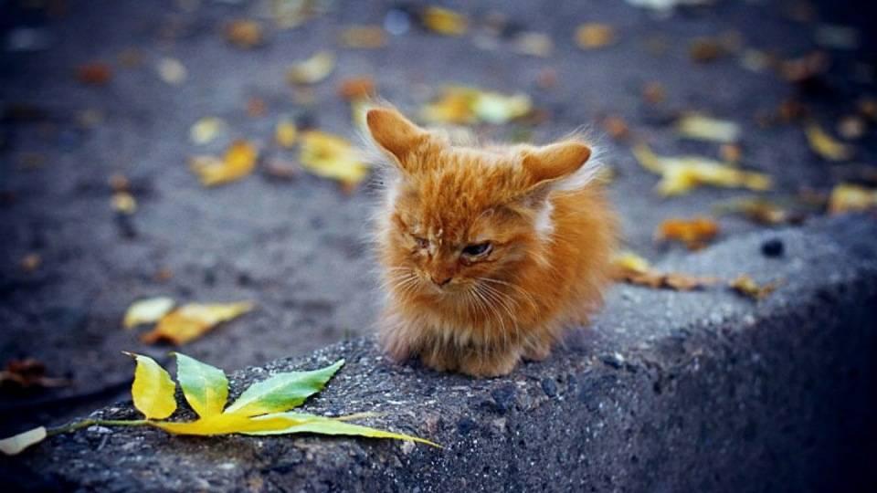 Почему кошка уходит умирать